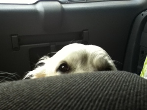 bonnie-in-the-car